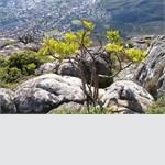 17. Персональная выставка В.В.Хвостова «Южно-Африканские зарисовки»,  15-25 февраля. Выставочный зал МОА Союза Дизайнеров